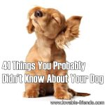 41 Things You Probably Didn't Know About Your Dog
