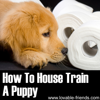 How to house train puppy when you work