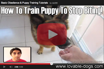 How To Train Puppy To Stop Biting