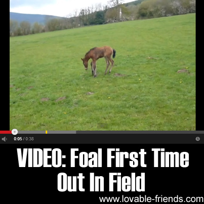 Foal First Time Out In Field