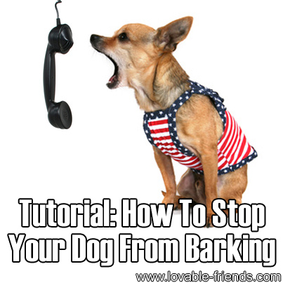 How To Stop Barking Dogs From A Distance