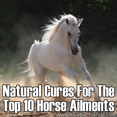 Natural Cures for Top 10 Horse Ailments