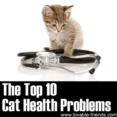 Cat health - Wikipedia