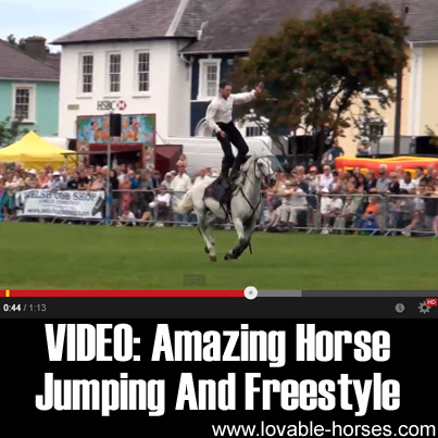 VIDEO - Amazing Horse Jumping And Freestyle