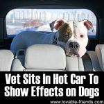 Why Is A Hot Car So Dangerous To Dogs?