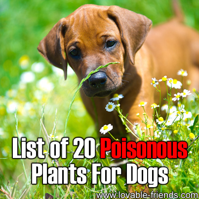 What house plants are harmful to dogs popular house plans and design ideas - Toxic plants for dogs and cats the danger behind flowers ...
