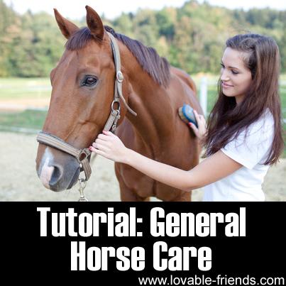 Tutorial: General Horse Care