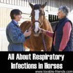 All About Respiratory Infections In Horses