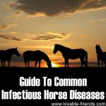 Guide To Common Infectious Horse Diseases