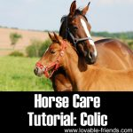 Horse Care Tutorial: Colic
