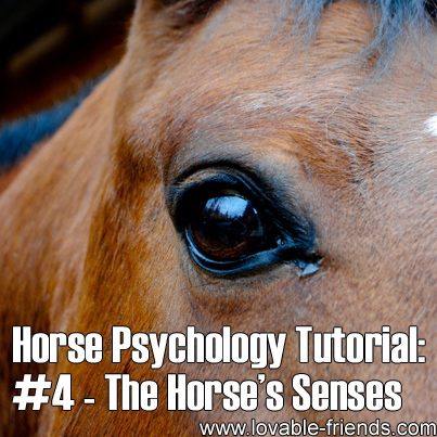 Horse Psychology Tutorial - Part 4 The Horse's Senses
