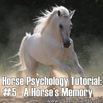 Horse Psychology Tutorial: Part 5 – A Horse's Memory