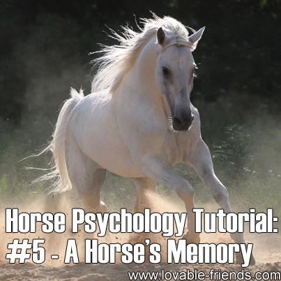 Horse Psychology Tutorial - Part 5 A Horse's Memory