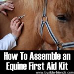 How To Assemble an Equine First Aid Kit