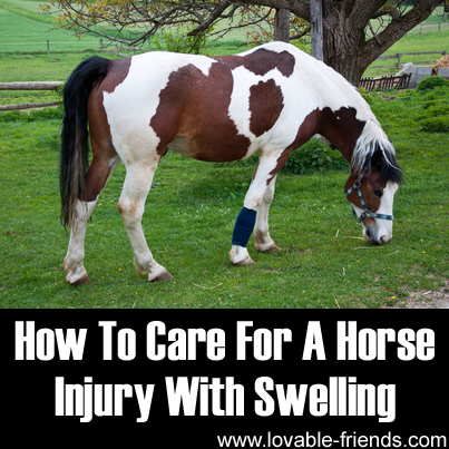 How To Care For A Horse Injury With Swelling