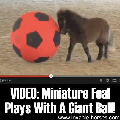 Miniature Foal Plays With a Giant Ball
