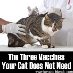 The Three Vaccines Your Cat Does Not Need