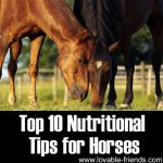 Top 10 Nutritional Tips for Horses