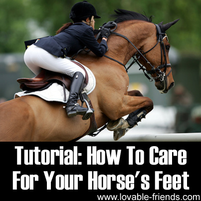 Tutorial - How To Care For Your Horse's Feet