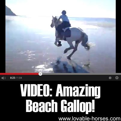 Video - Amazing Beach Gallop