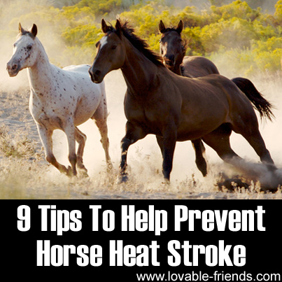9 Tips To Help Prevent Horse Heat Stroke
