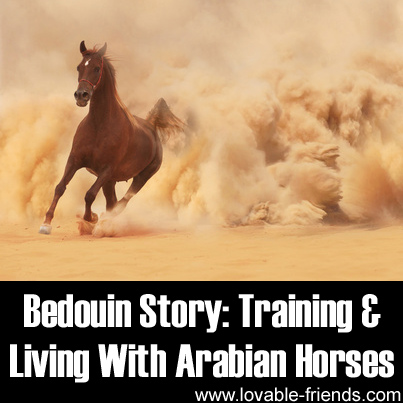 Bedouin Story - Training and Living With Arabian Horses