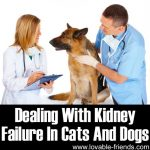 Dealing With Kidney Failure In Cats And Dogs