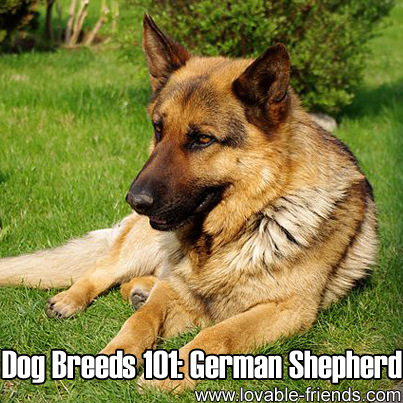 Most Popular Breed Of Dog In Germany