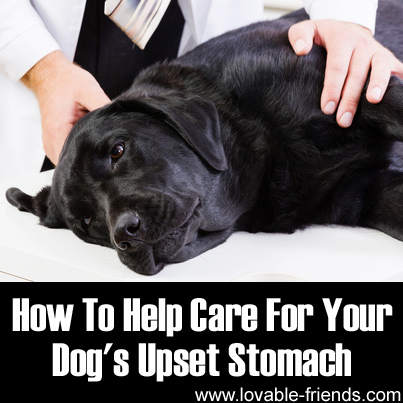 What Can Help A Cat With An Upset Stomach