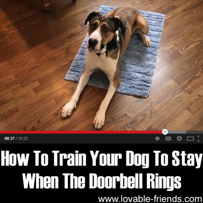 How To Train Your Dog To Stay When The Doorbell Rings Lovable Friends