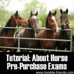 Tutorial: About Horse Pre-Purchase Exams