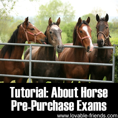 Tutorial - About Horse Pre-Purchase Exams