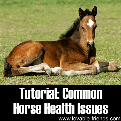 Tutorial - Common Horse Health Issues
