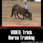 Video: Trick Horse Training