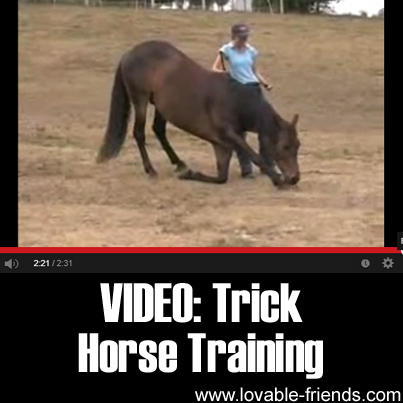 Video - Trick Horse Training