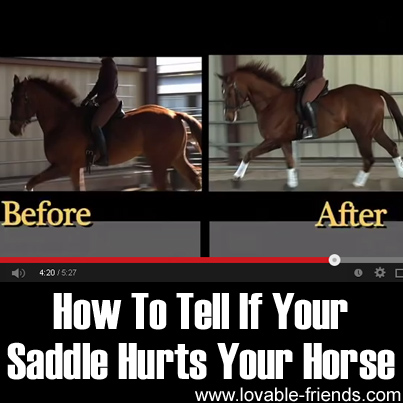 How To Tell If Your Saddle Hurts Your Horse