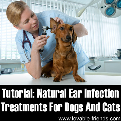 Natural Cures For Yeast Infections In Dogs Ears