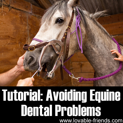 Tutorial - Avoiding Equine Dental Problems