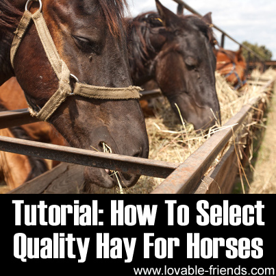 Tutorial - How To Select Quality Hay For Horses