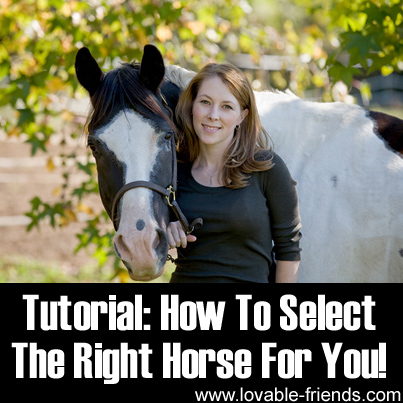 Tutorial - How To Select The Right Horse For You