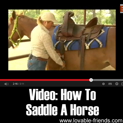 Video: How To Saddle A Horse