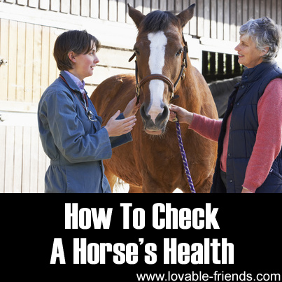 How To Check A Horses Health