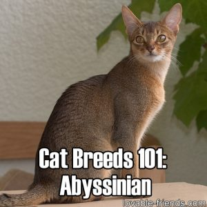 Cat Breeds 101 - Abyssinian
