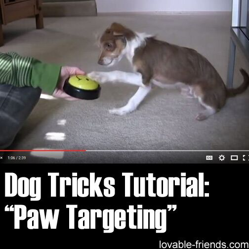 Dog Training Paw Targeting