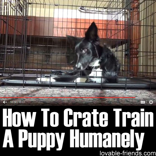 How To Crate Train Train A Puppy Humanely