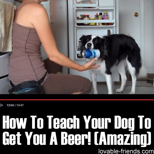 How To Teach Your Dog To Get You A Beer! (Amazing)