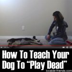 How To Teach Your Dog To Play Dead