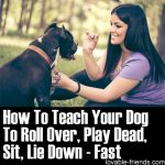 How To Teach Your Dog To Roll Over, Play Dead, Sit, Lie Down – Fast