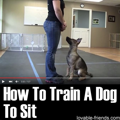 How To Train A Dog To Sit Lovable Friends