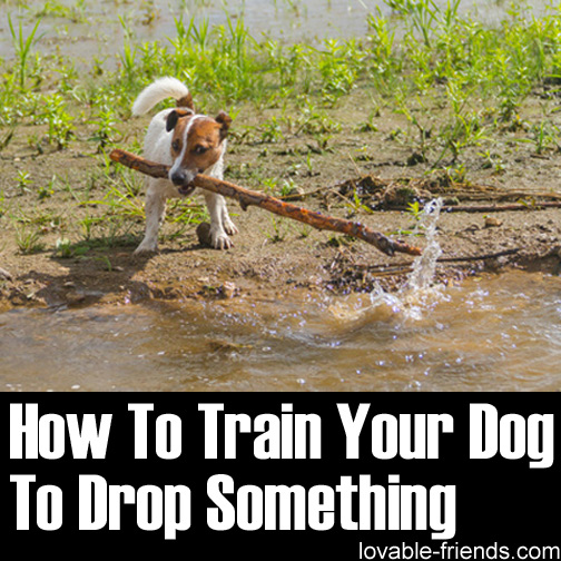 How-To-Train-Your-Dog-To-Drop-Something